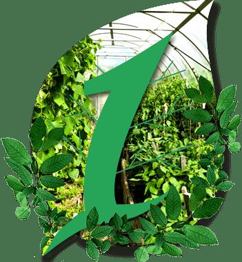 Первая Теплица со сроком службы 10 лет, УФ-защитой, улучшают фотосинтез